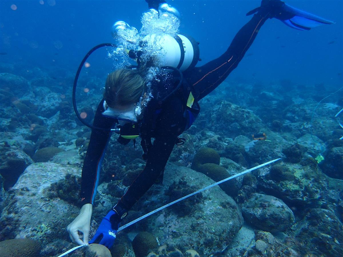 Putting reef check transect in place, Principe