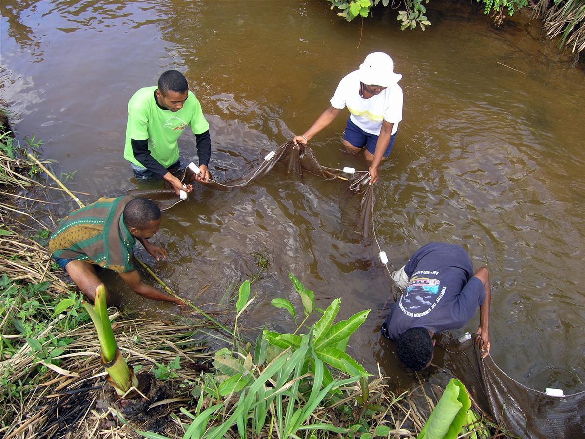 Freshwater Fish Inventory, Ivoloina, Madagascar