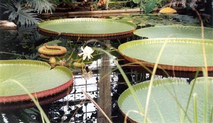 Botanische rondleiding in MSK en Plantentuin Gent