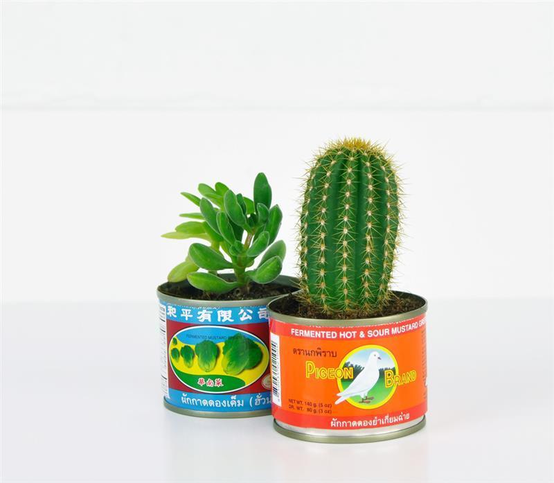 [H1]Plante dans[/H1][H2]des pots récups[/H2]