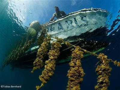Fiji pearl cultivator J. Hunter Pearls , ocean stewards and pioneers of a circular blue economy.