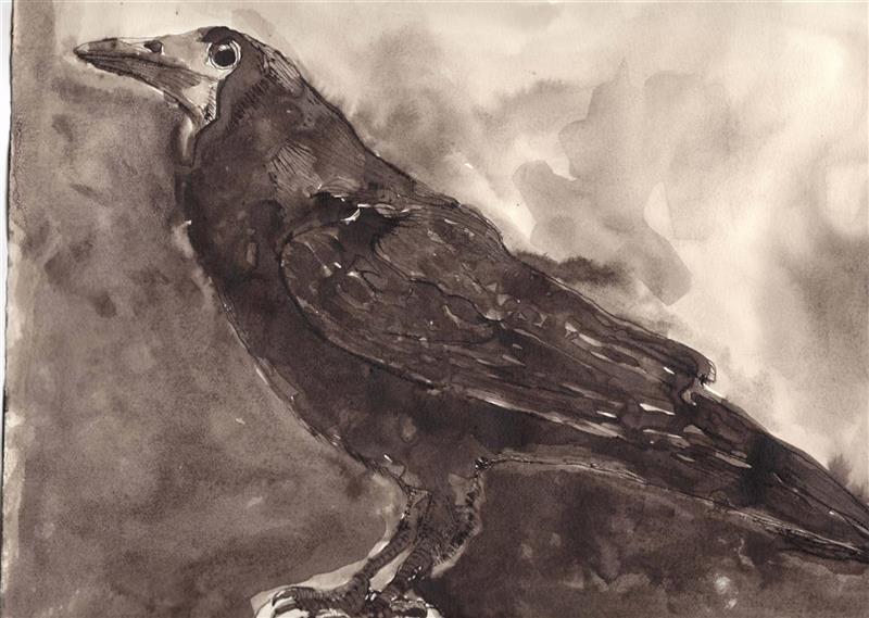'Black raven on white rock', 2020