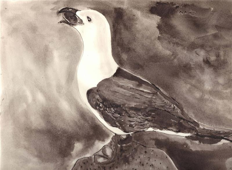'Great black-backed gull with white breast', 2020