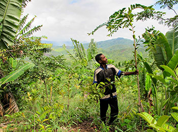 Madagascar: Community action on forest restoration towards a sustainable future